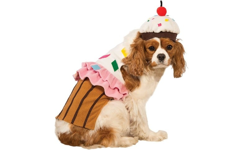 Everything is Cake dog halloween costume