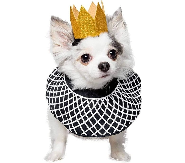 Ruth Bader dog halloween costume (1)