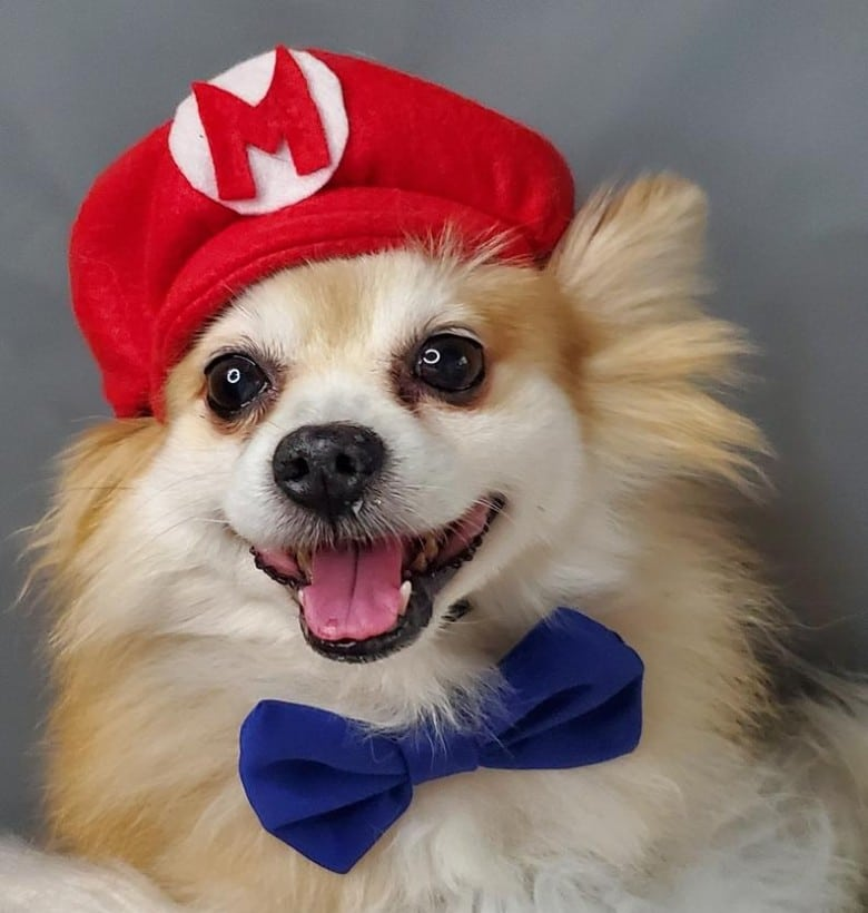 Super Mario Brothers dog halloween costume