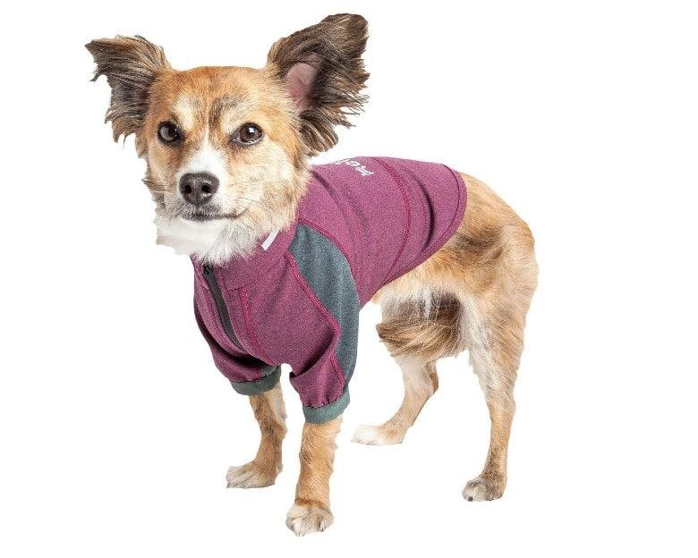 Yoga Dog dog halloween costume