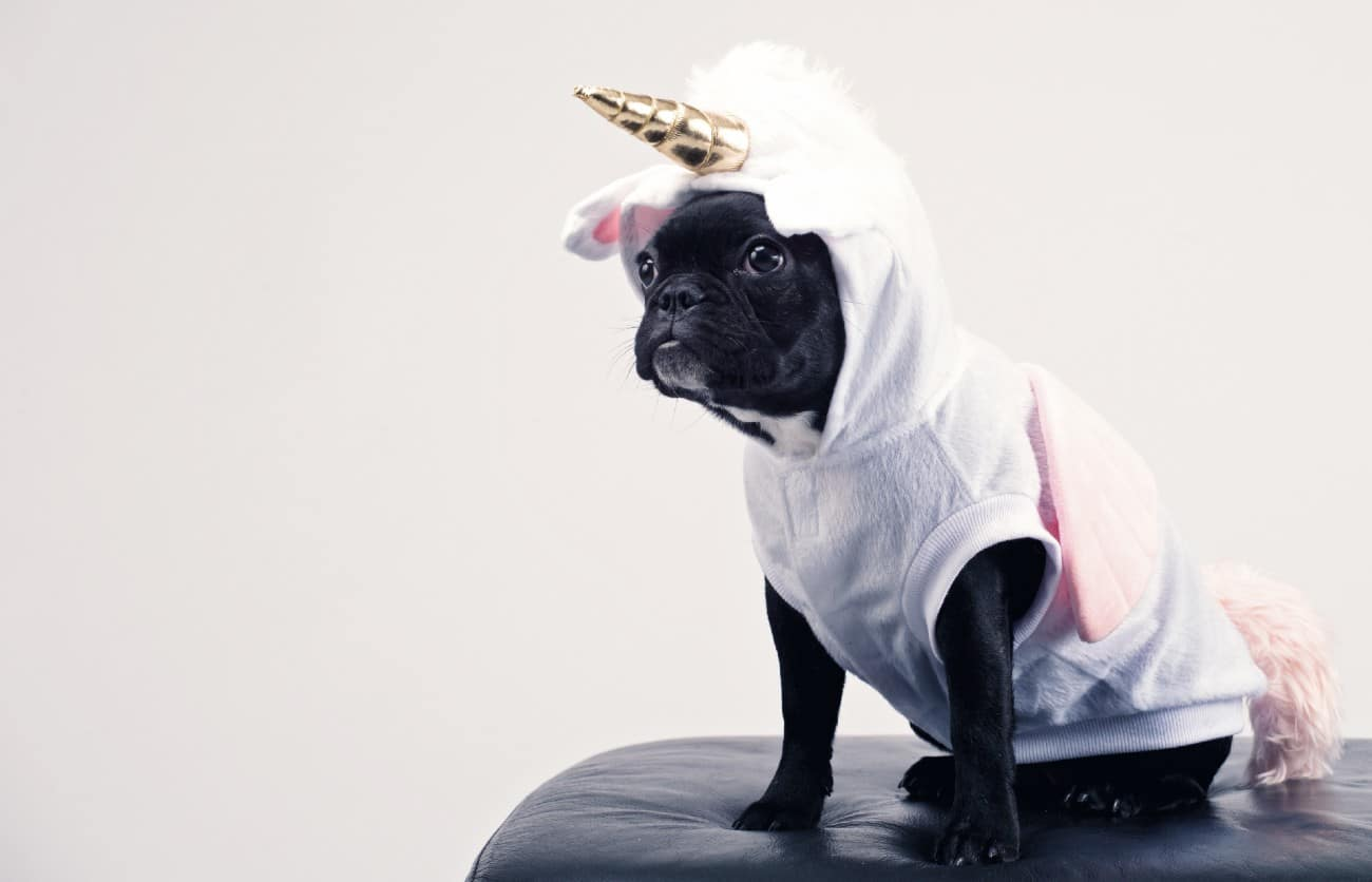 12 Dog Halloween Costumes That Are So On Point for 2020