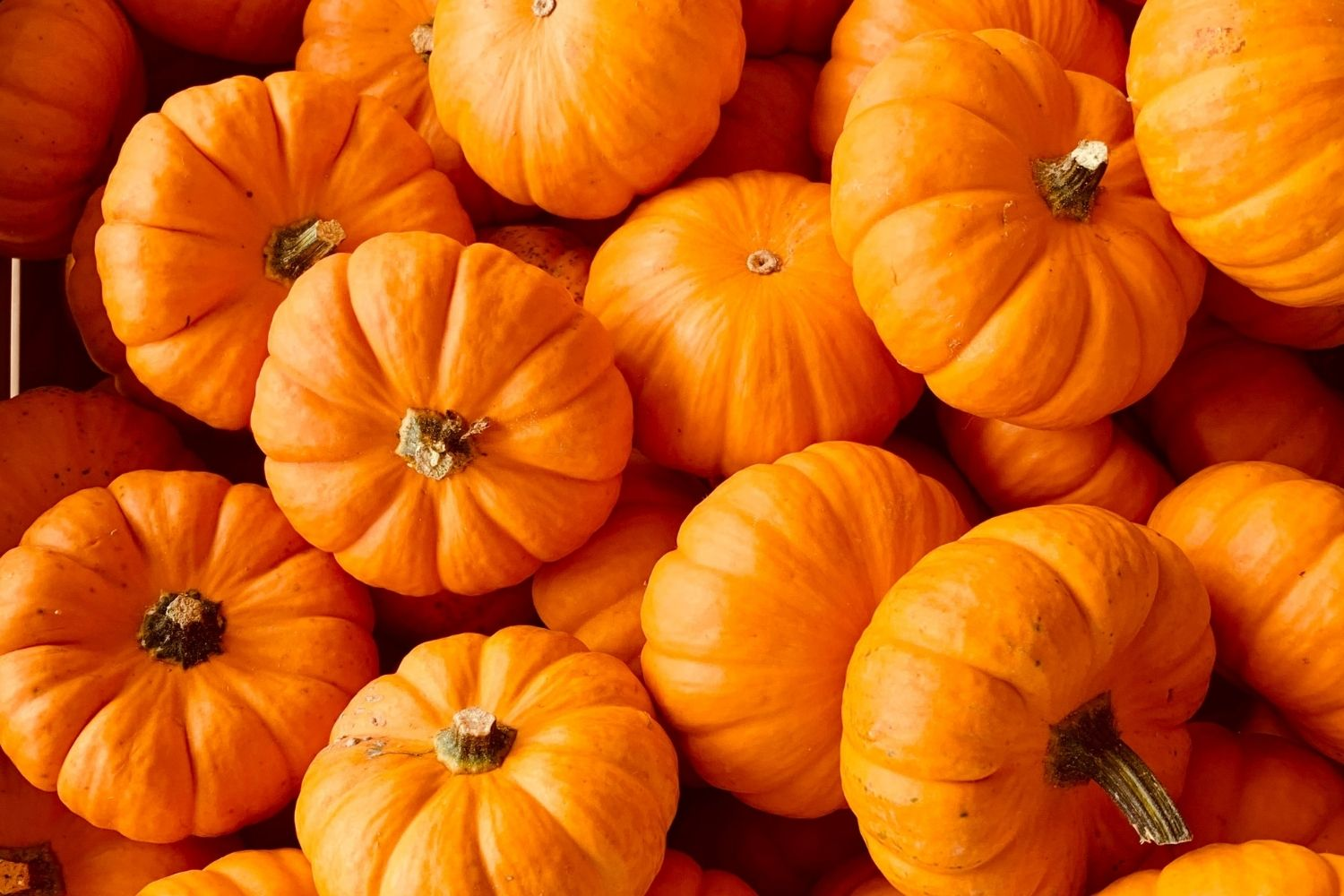 Oh My Gourd! 5 Yummy Fall Pumpkin Recipes for Your Dog
