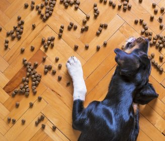 18 Dog Food Brands Have Now Been Voluntarily Recalled After Mold Was Found