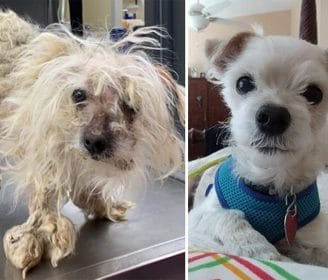 See the Amazing Transformation of This Shelter Dog — And the Importance of Second Chances
