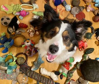 genius dog challenge dog with toys