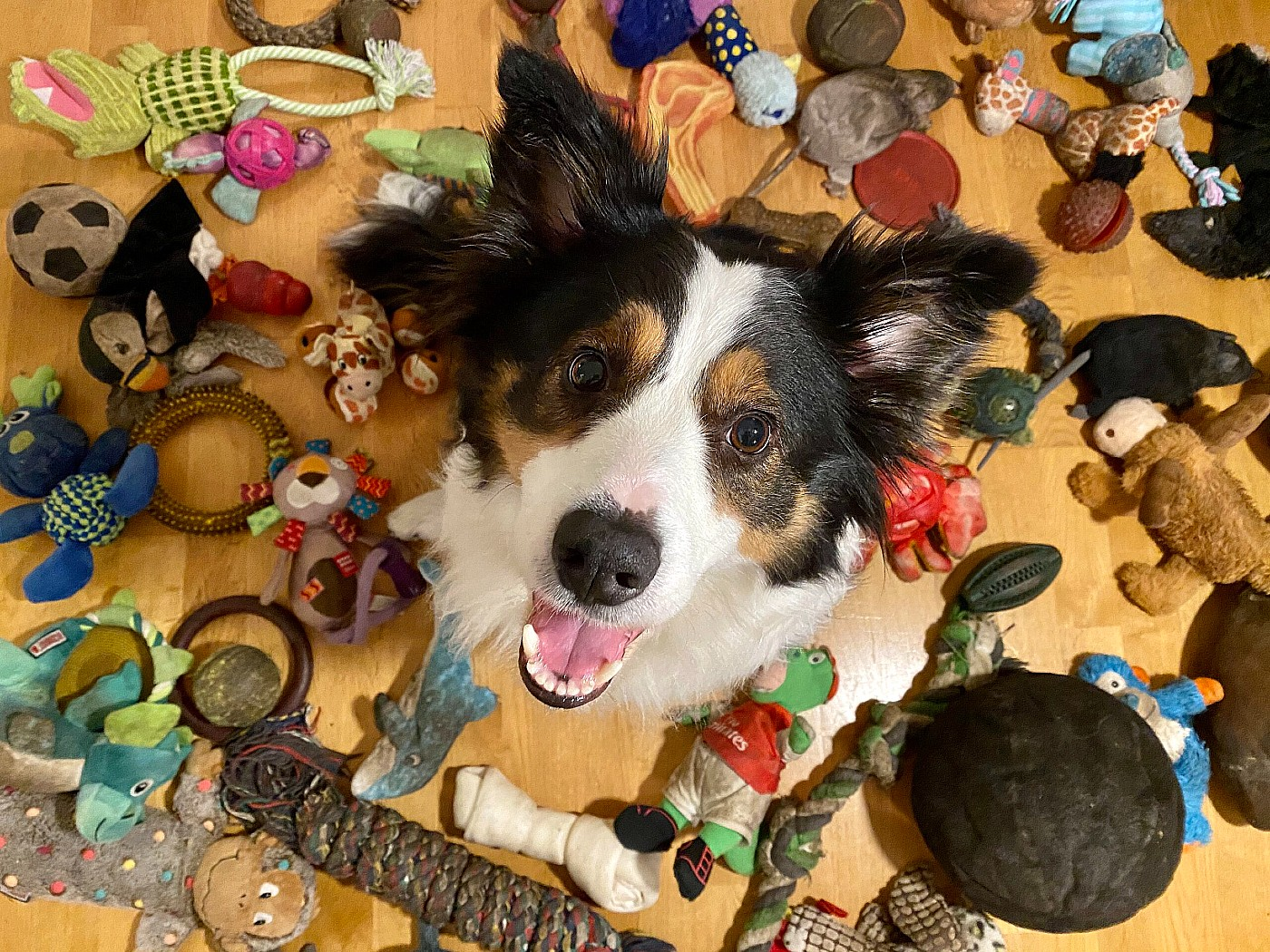 genius dog challenge dog with toys