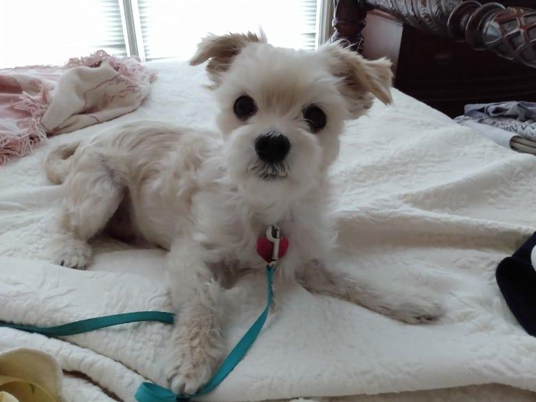 Scruffy now Teddy. Scruffy. Image Credit_ Dirty Dog Contest