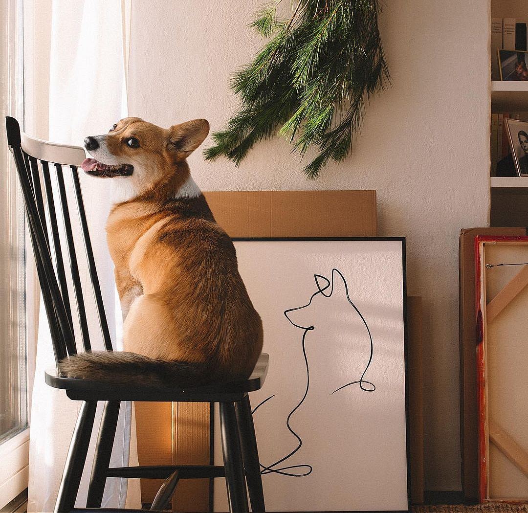 Ultimate Holiday Gift Guide: 10 Special Gifts for Dogs and Dog Lovers