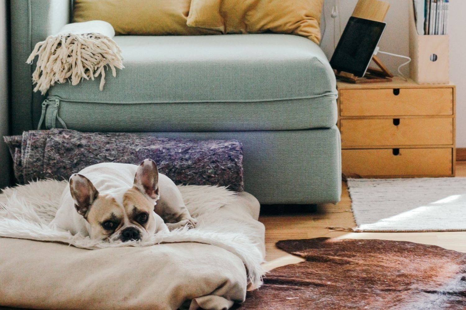Bored Dog? Here Are 15 Virtual Socialization Training Events for Your Pup.