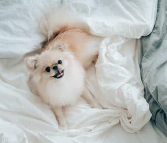 should you have your dog sleeping in bed with you