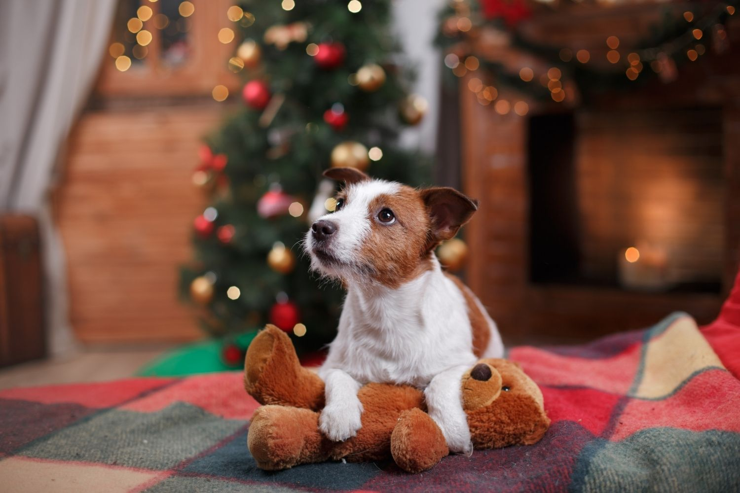 Want to Keep Your Dog Safe During the Holiday Season? Use These 9 Apps.