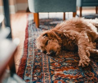 taking care of your rug when you have a dog pet-friendly rugs