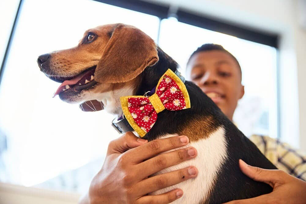Meet the 14-Year-Old Making It His Mission to Help Shelter Dogs One Bow Tie at a Time