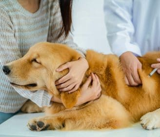 Dogs need the coronavirus covid-19 vaccination shot