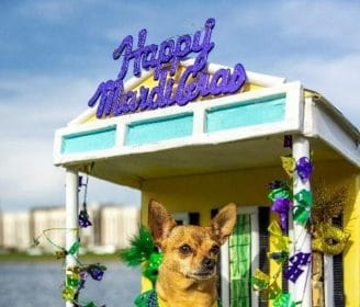 Dog House Floats Take Over New Orleans After Mardi Gras Cancellation
