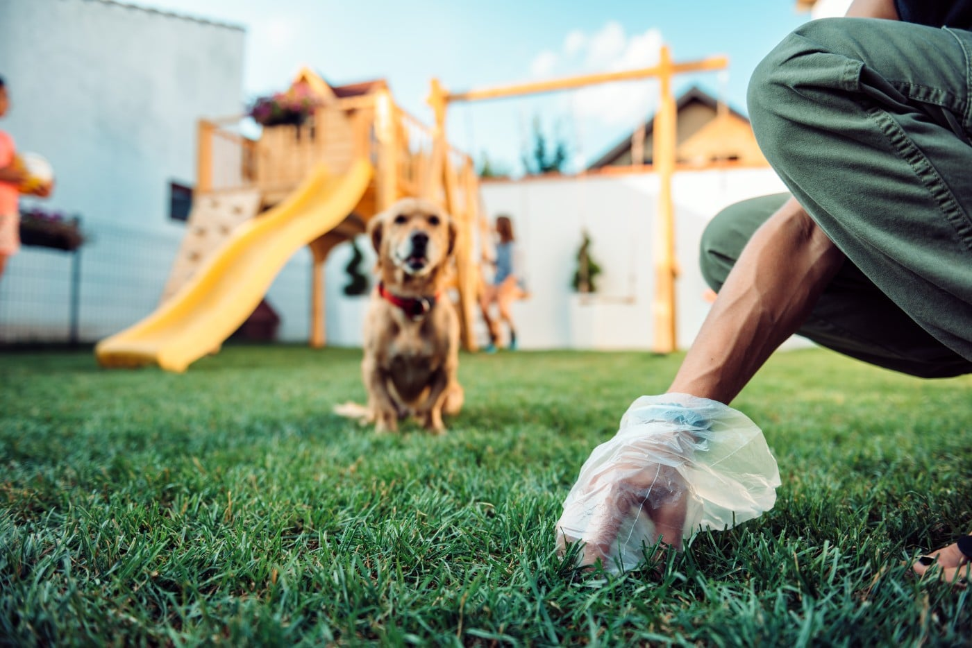 What Your Dog's Poop Says About Health