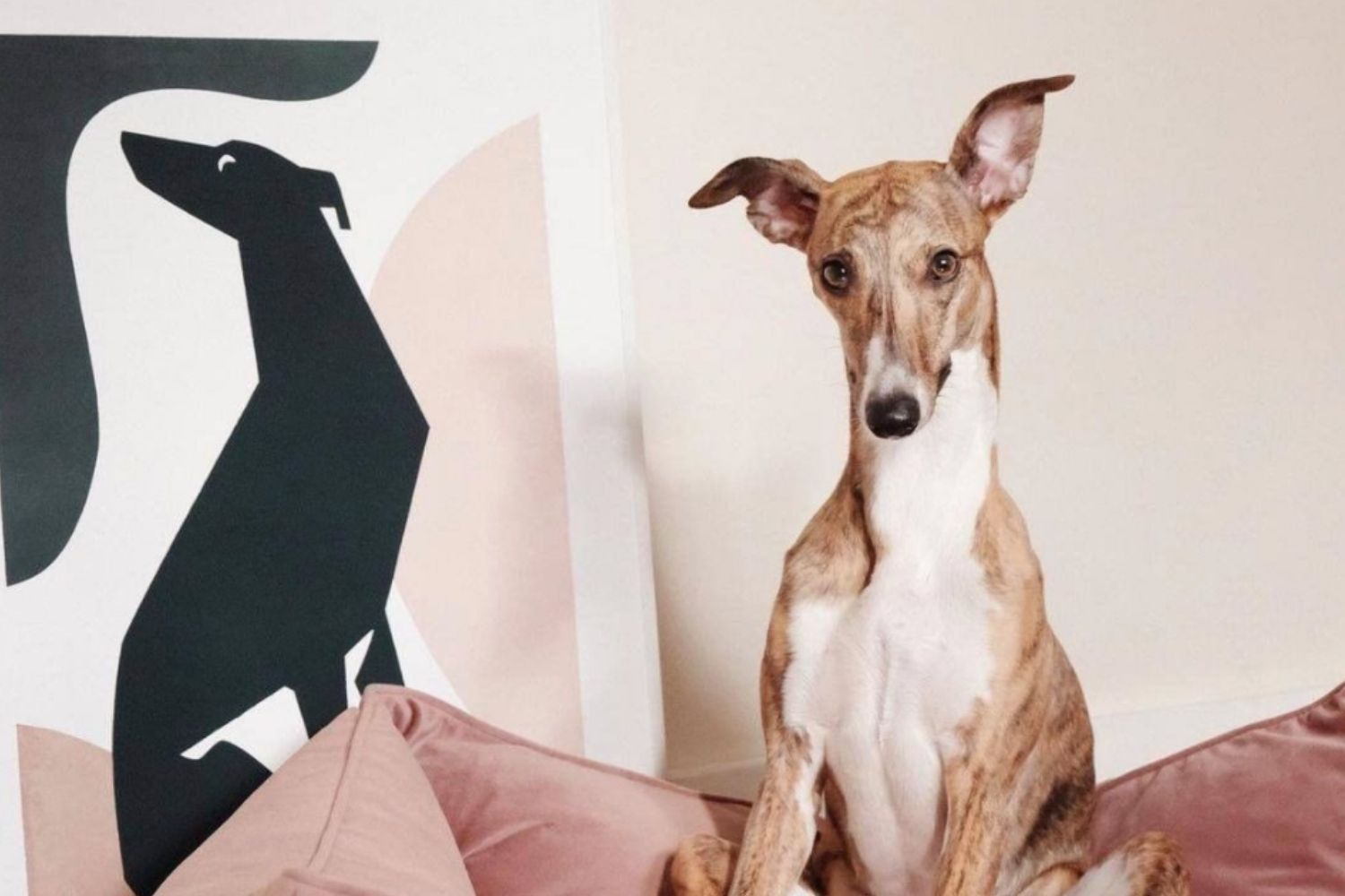 The Perfect Valentine's Day Gifts for Dogs (and Their Parents)