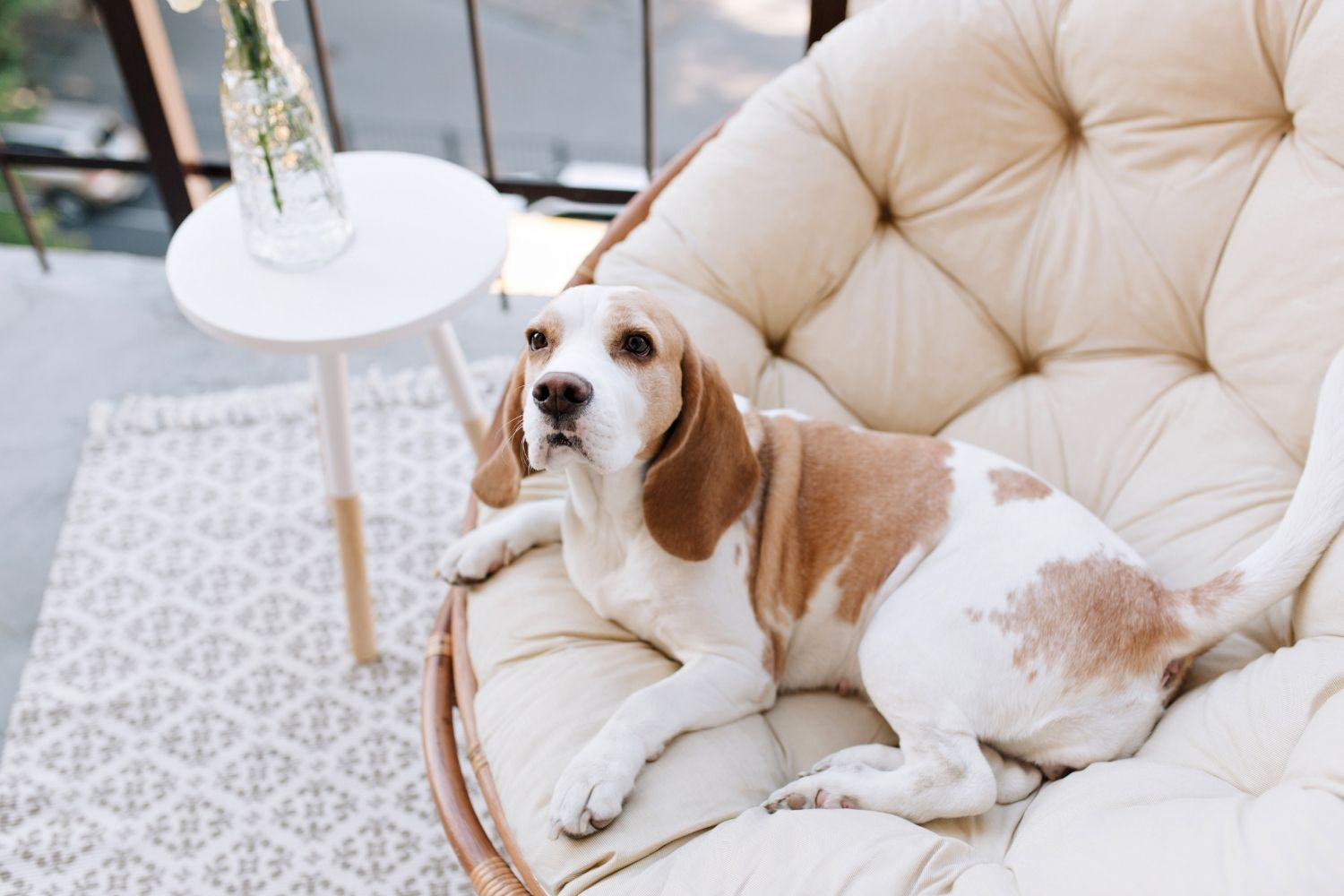 So Hard to Say Goodbye: Separation Anxiety in Dogs