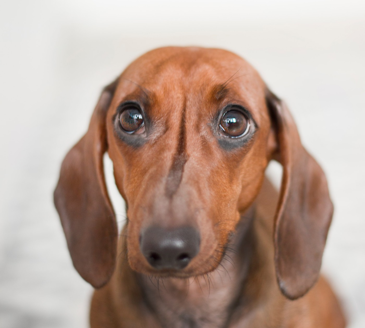 scared dog Causes of anxiety in dogs