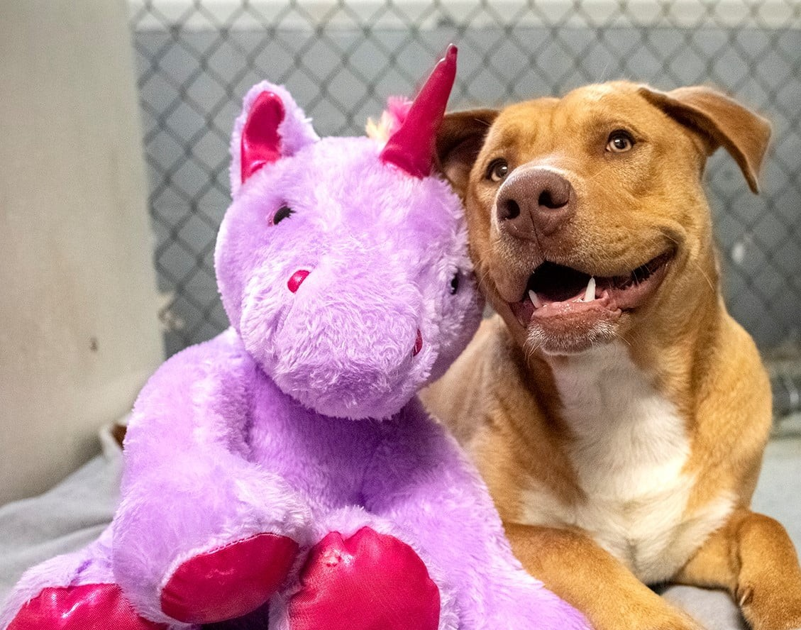 After Continually Sneaking Into a Store to Steal a Unicorn Toy, a Stray Dog Gets an Enchanted New Beginning