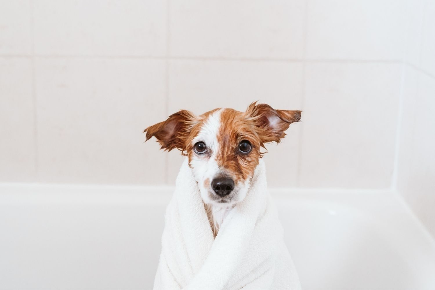 The Answer to Dog Odor: Why Your Dog Stinks and How to Handle It