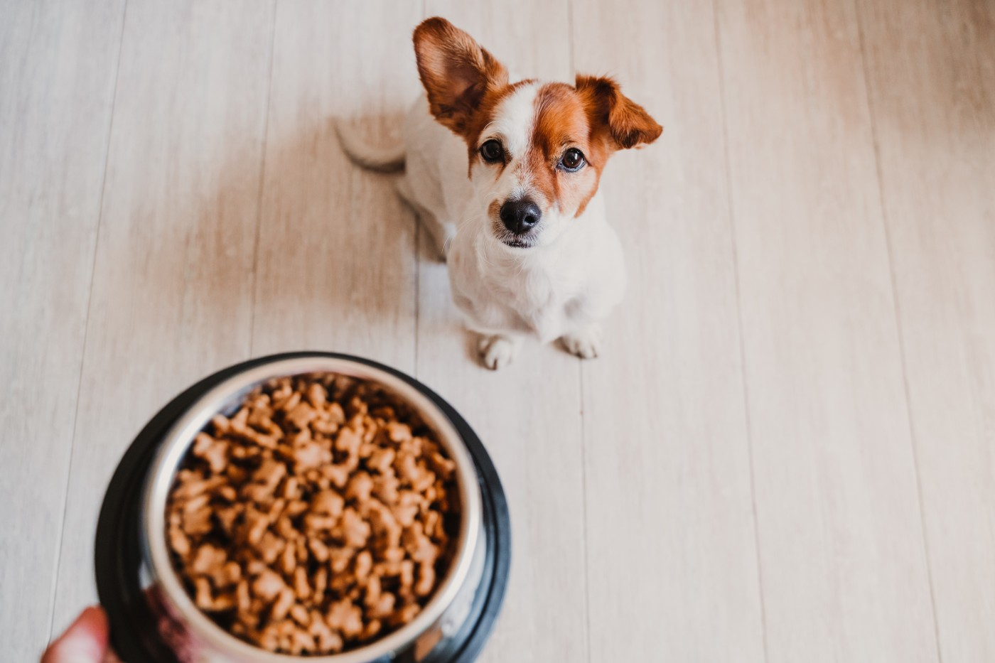 Midwestern Pet Foods dog food recall