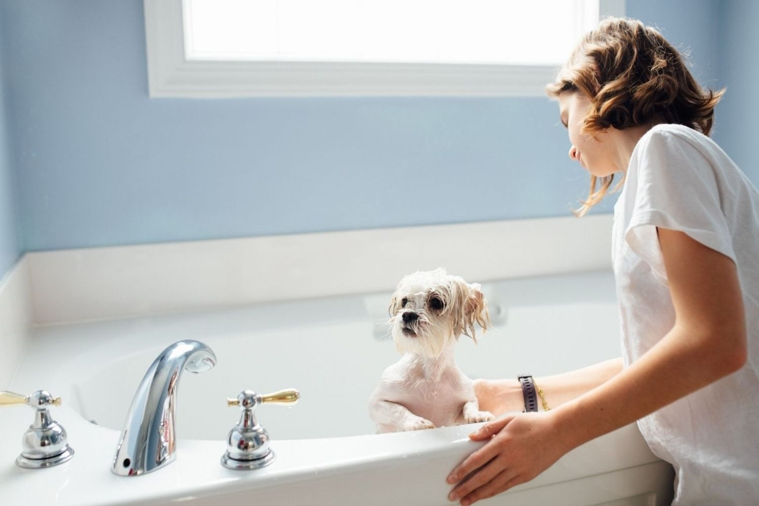 The Lowdown on Your Dog's Itchy Skin and Dry Coat