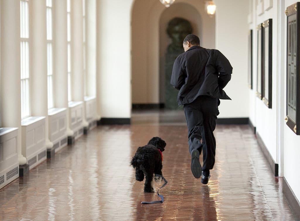 President Barack Obama and Bo