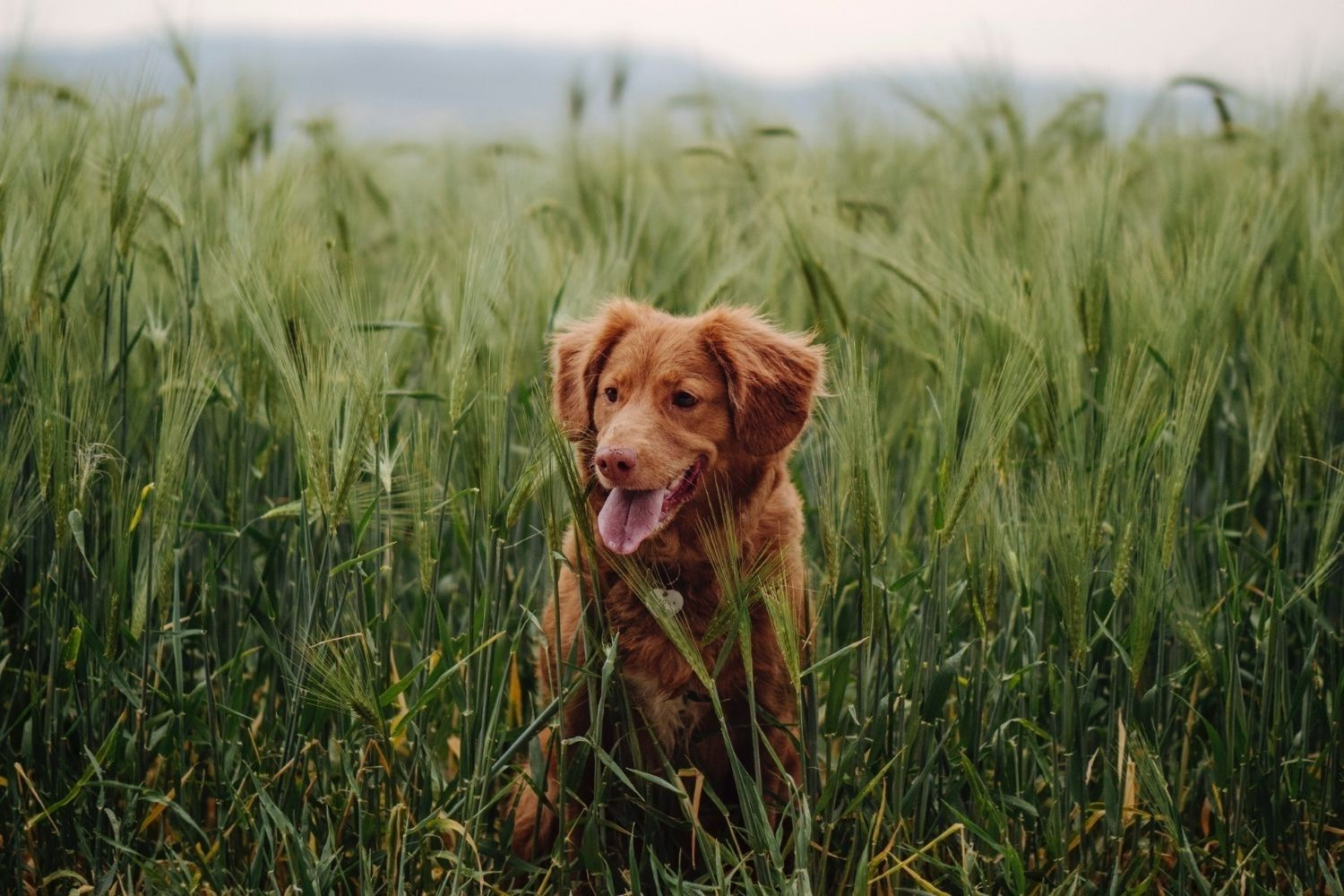 From Ticks to Fleas, Here Are DIY Sprays to Protect Your Dog Outside