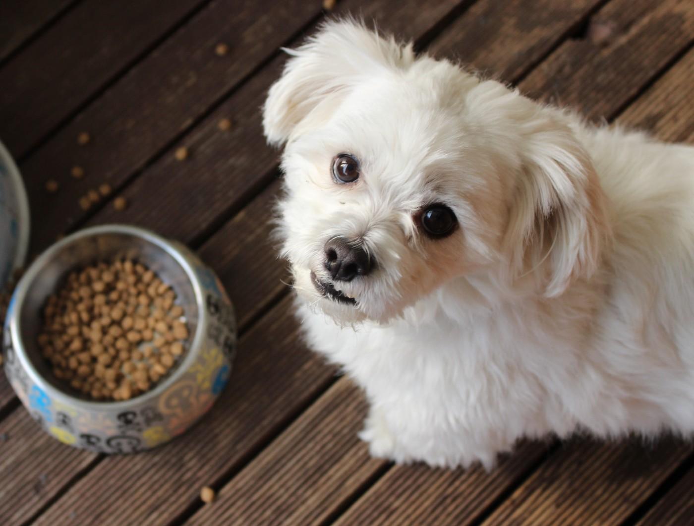 Sunshine Mills Once Again Pulls Dog Food Brands From Shelves