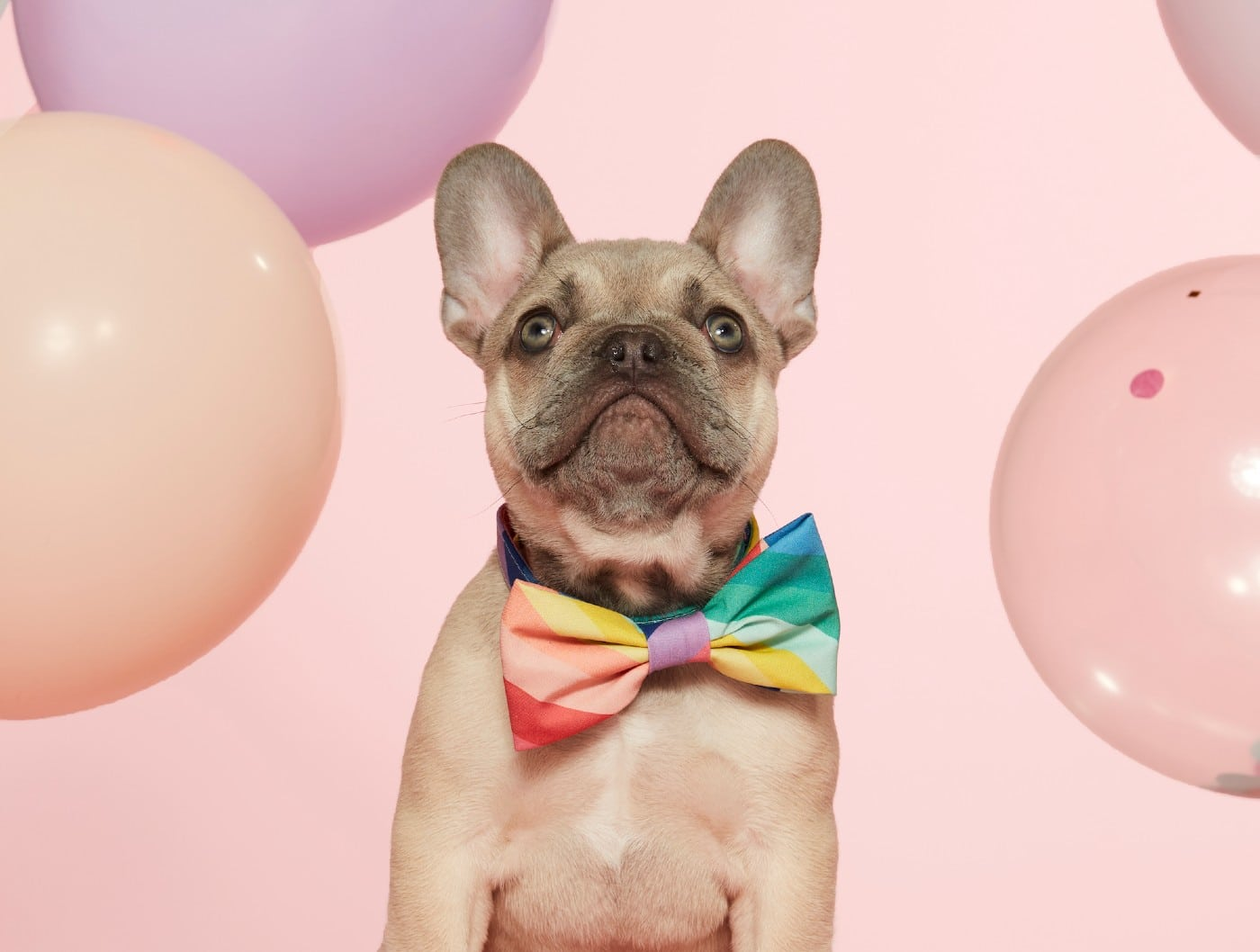 7 Our Favorite Pride Essentials for Your Dog