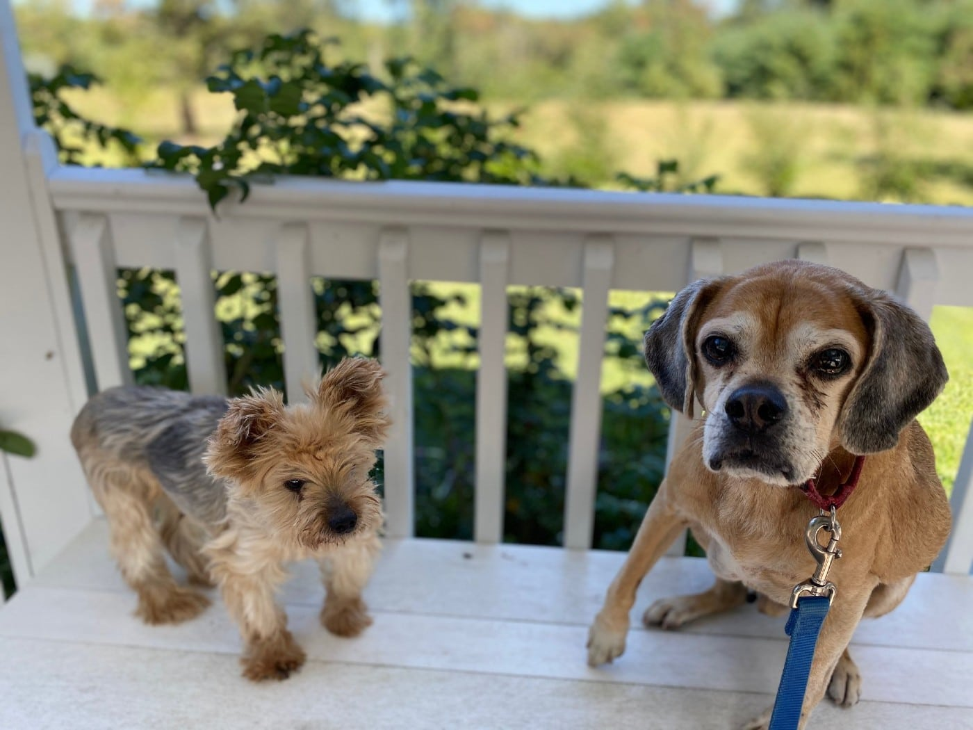 See the Retirement Home Where Senior Dogs Get to Live Out Their Golden Years