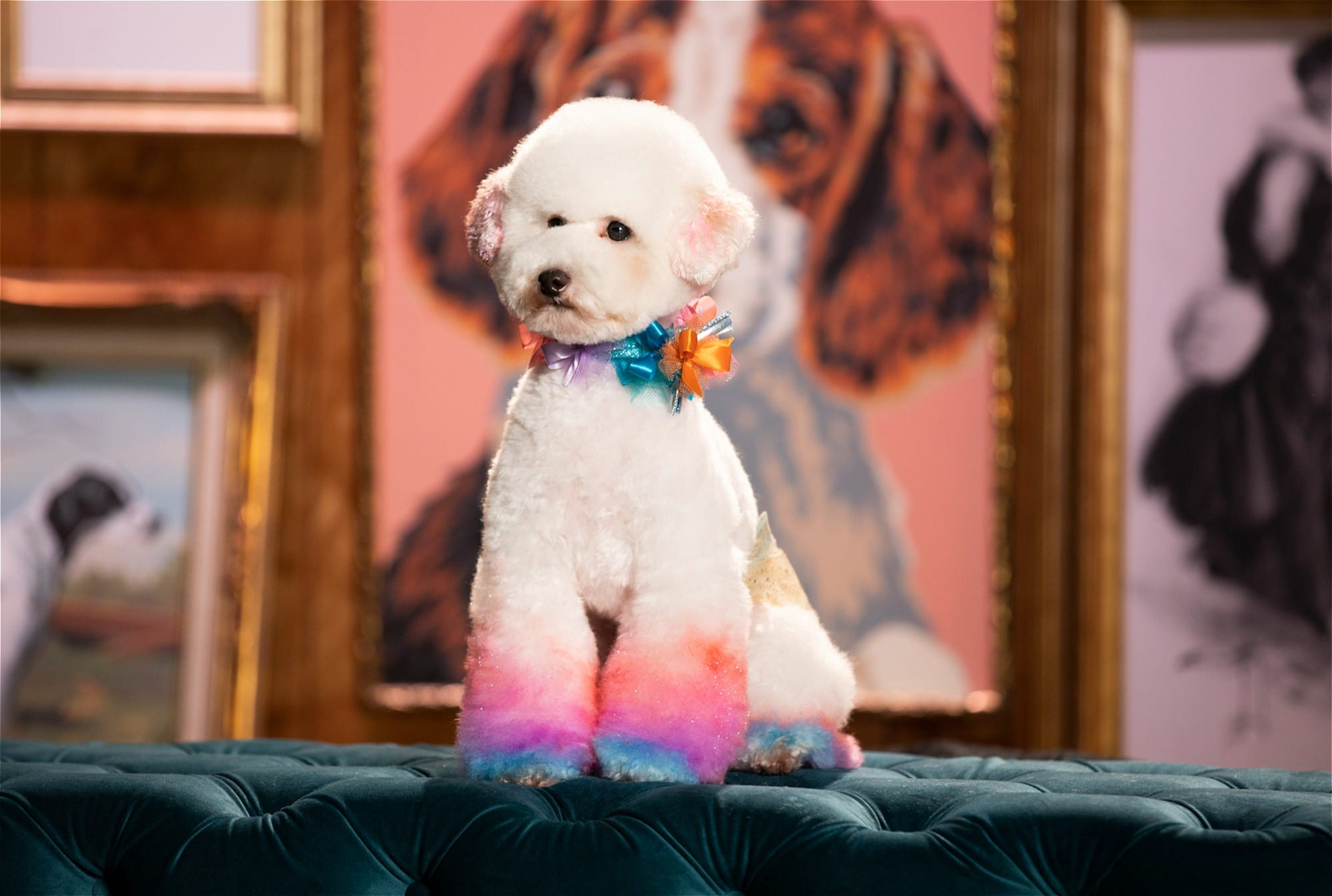 5 Binge-Worthy Dog Shows to Watch Right Now