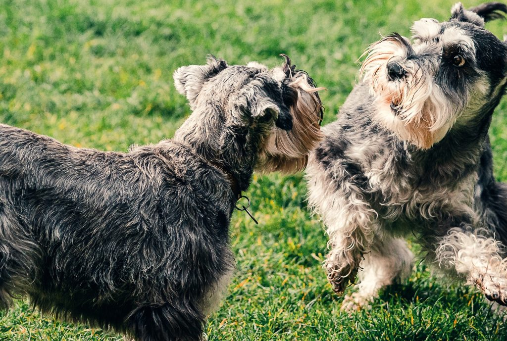 Dogs playing at a park