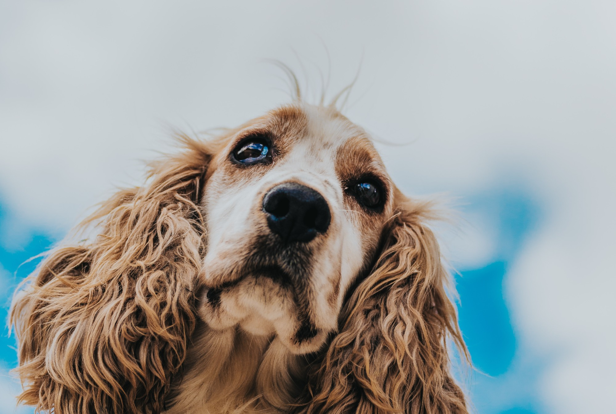 10 Breeds That Are Prone to Allergies