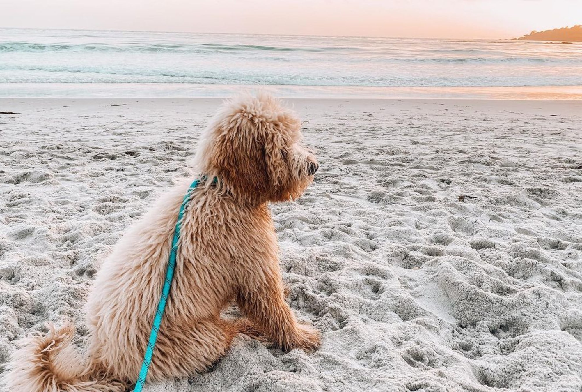 7 Dog-Friendly Beaches to Take Your Pup to Cool Off This Summer