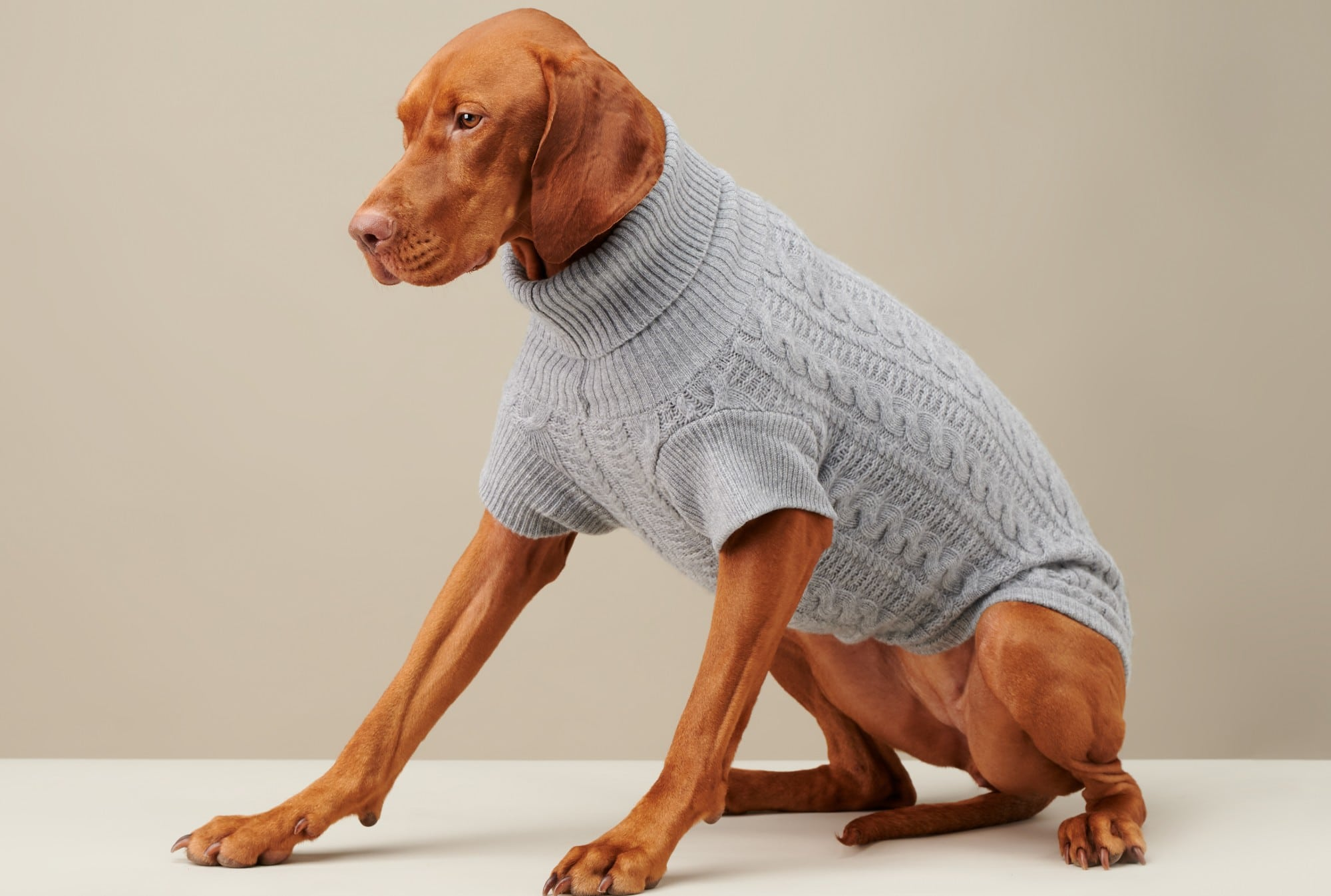 Cozy Up With Our Ultimate Dog Sweater Buying Guide
