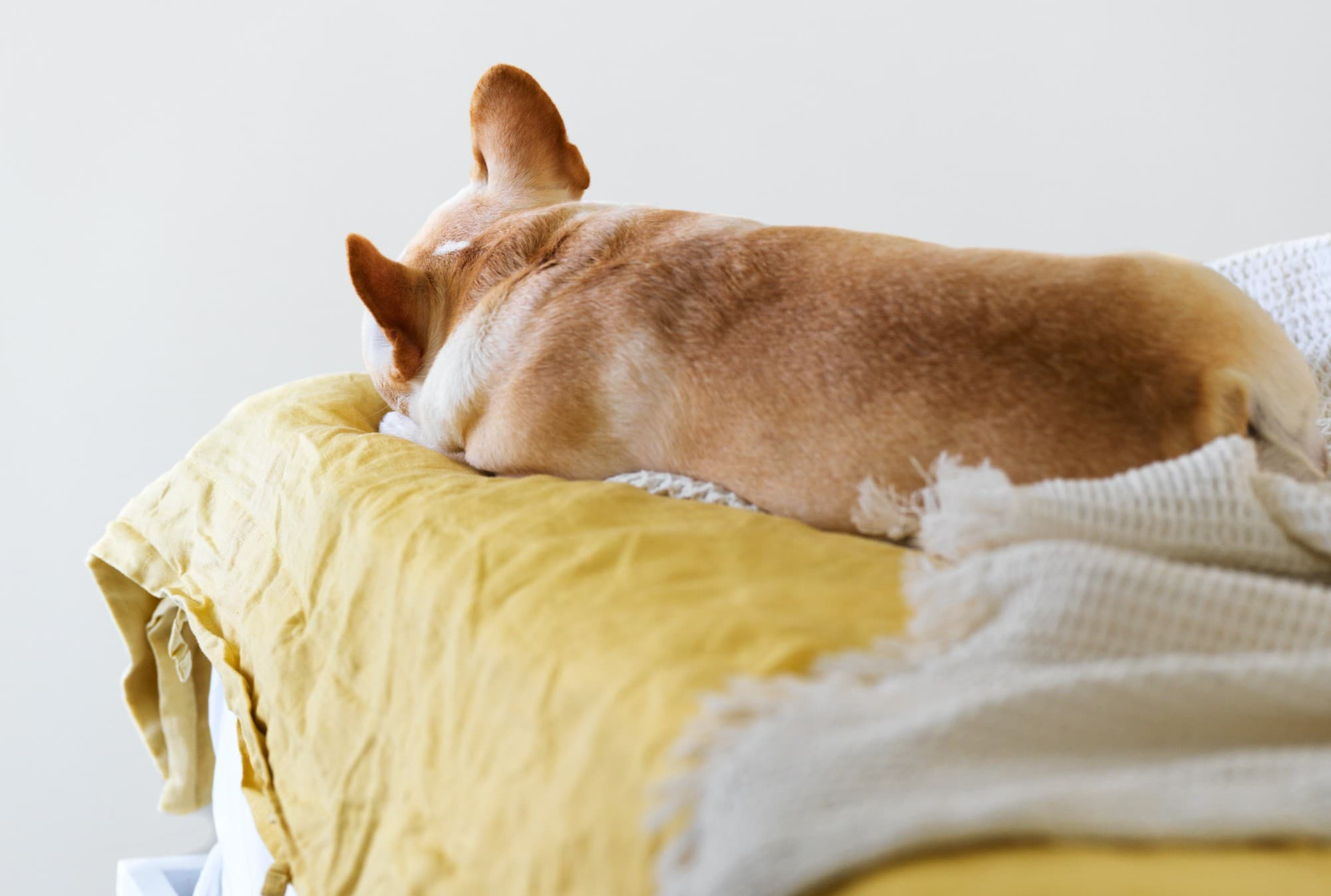 The Most Common Bone and Joint Issues in Young Dogs
