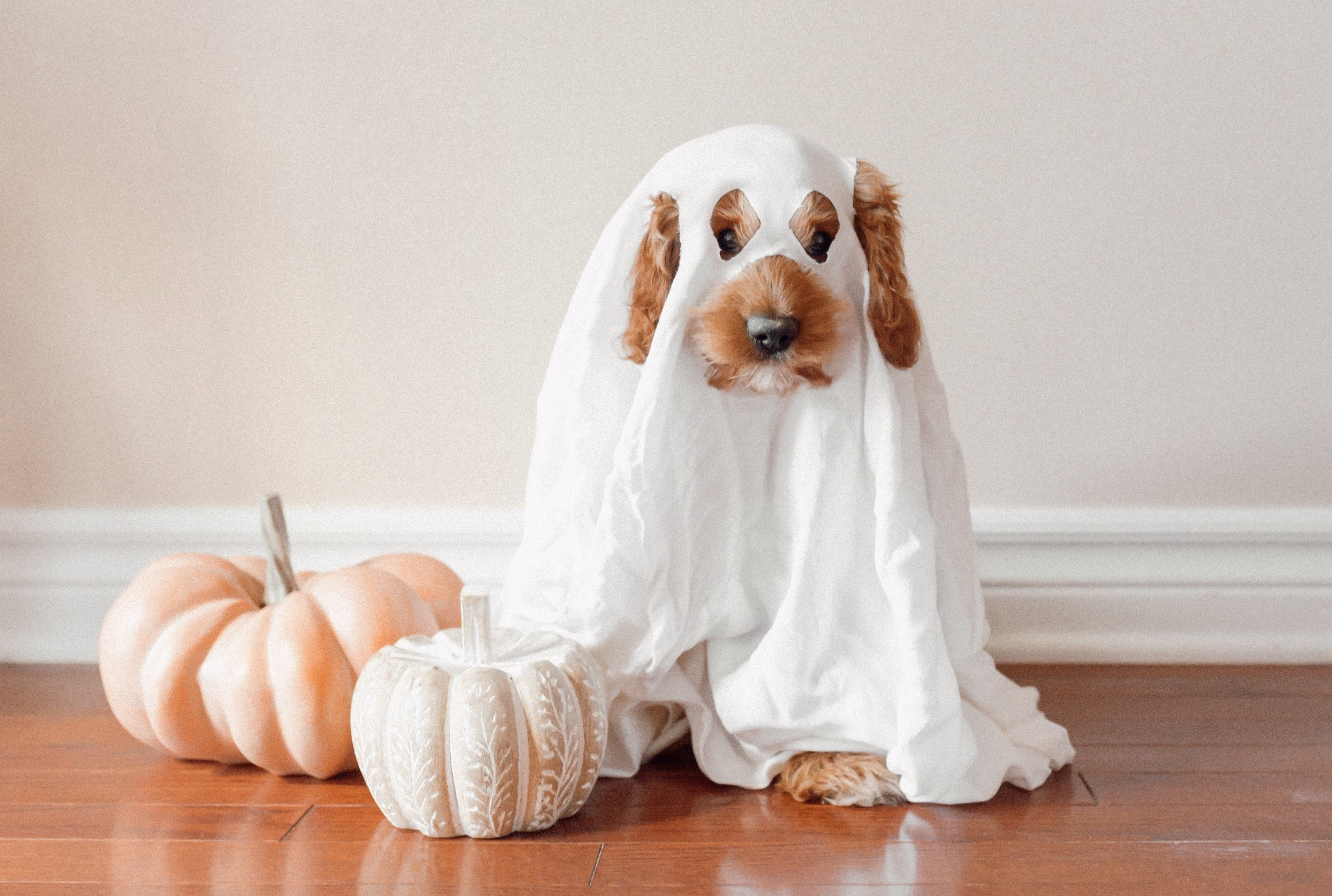 5 Essential Safety Tricks That Make Halloween a Treat for Your Pup