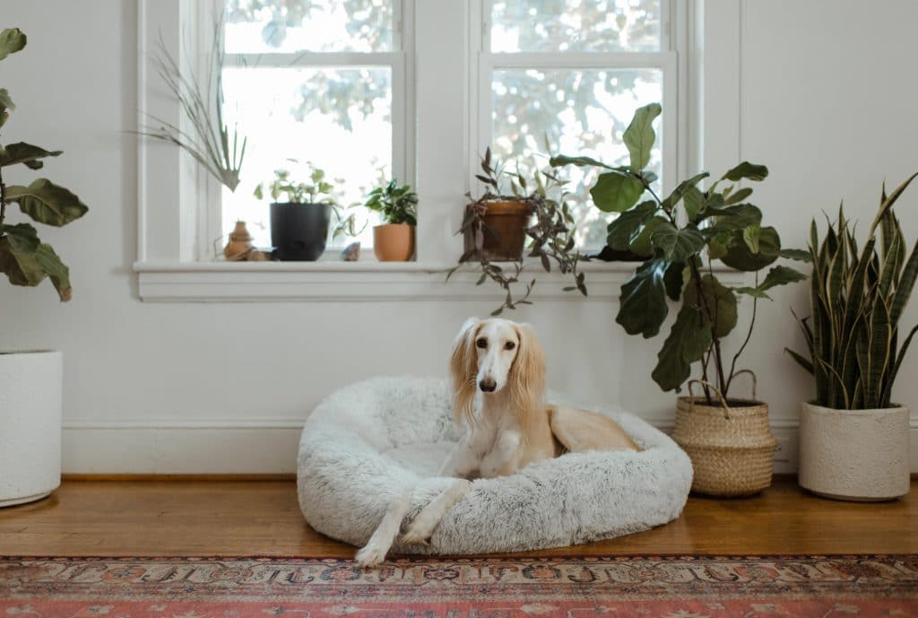 dog sitting on bed by plants