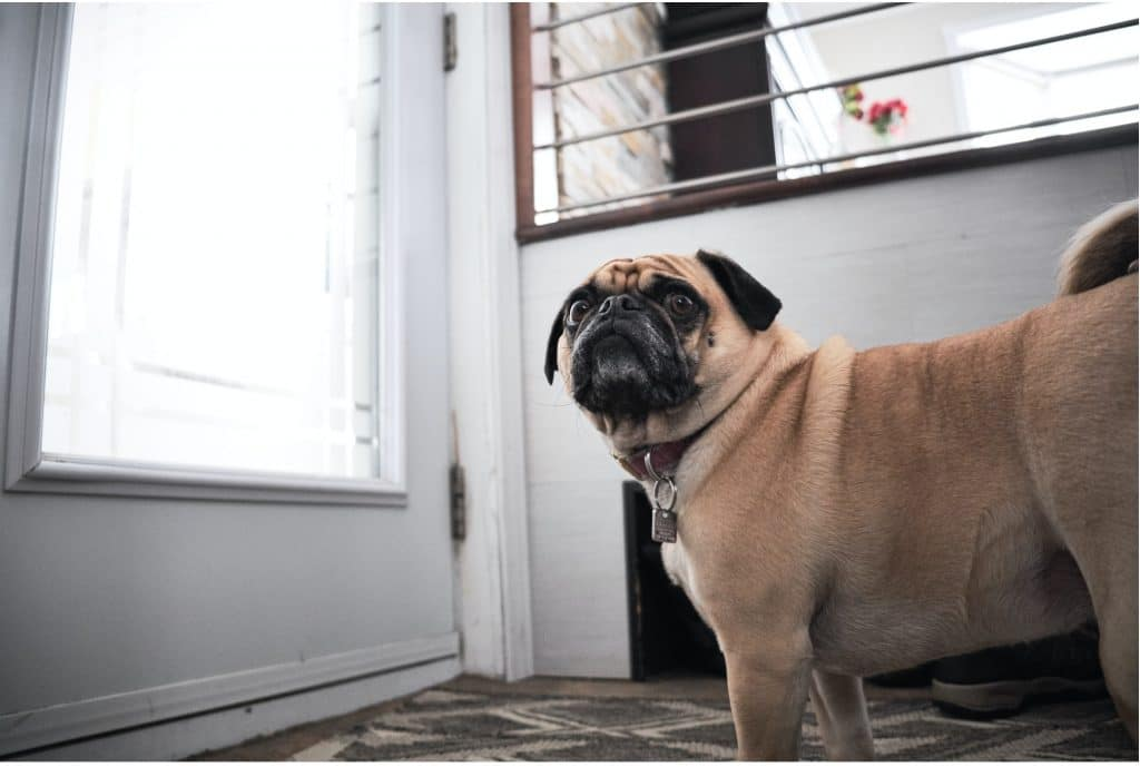 Leaving Your Dog Home Alone 2